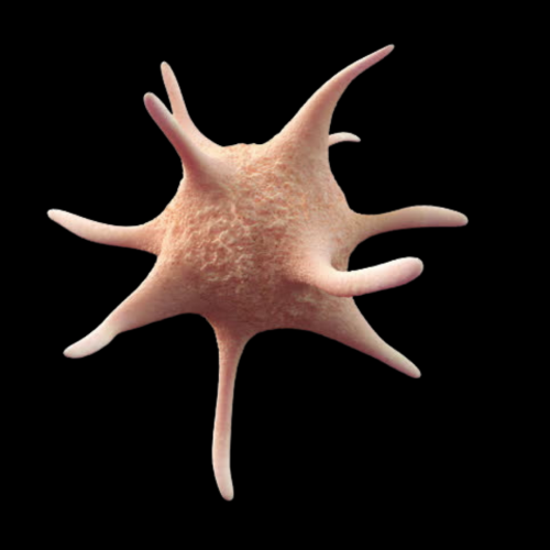 Platelet-rich plasma Knee